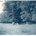 Carte postale (25)