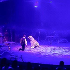 Cirque Toussaint 2015 b