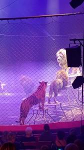 Cirque Toussaint 2015 c