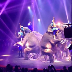 Cirque Toussaint 2015 d